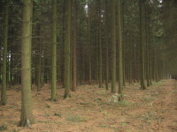 Ardennes Forest.